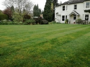 Lawn with moss in need of professional care