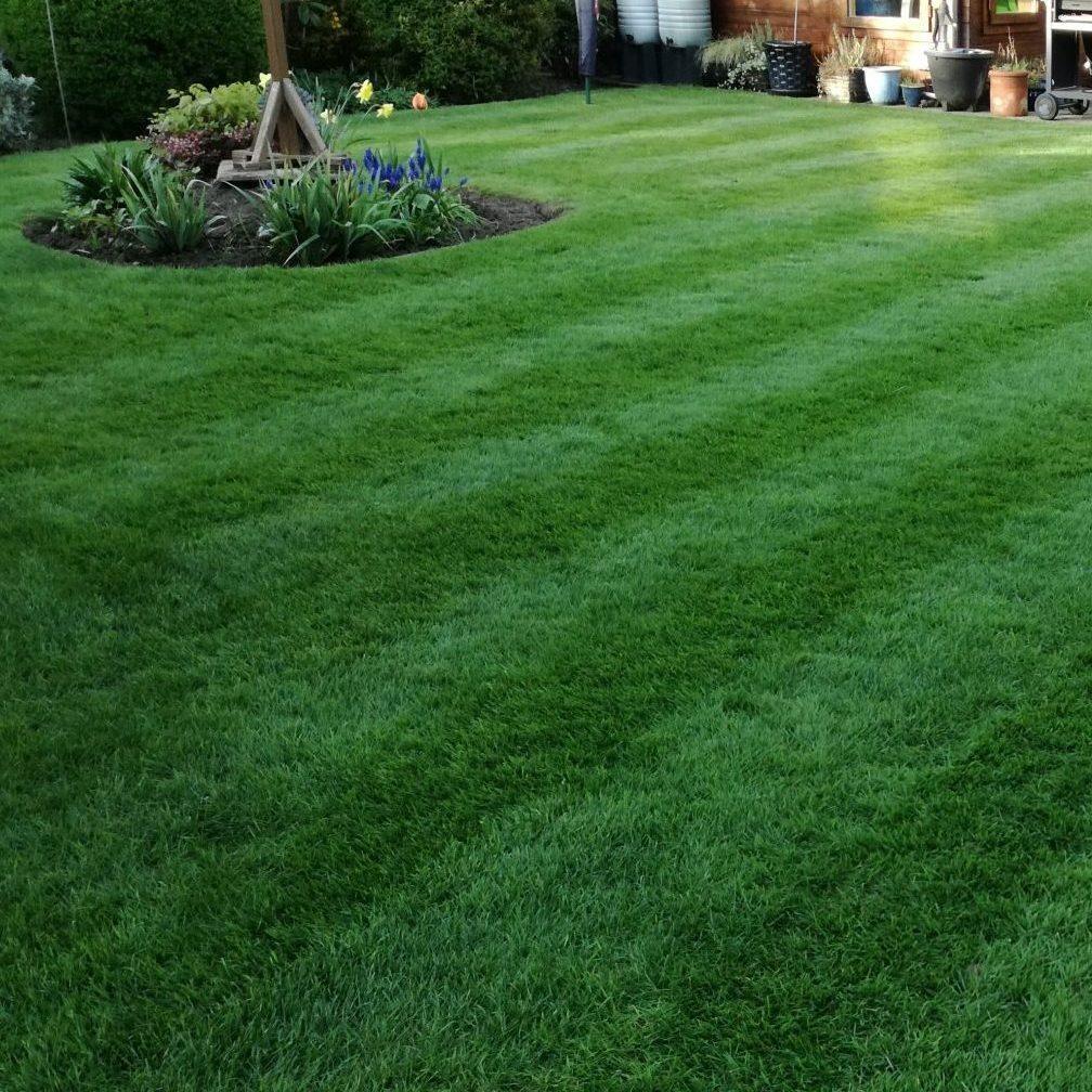 Lawn Improvement near Woking