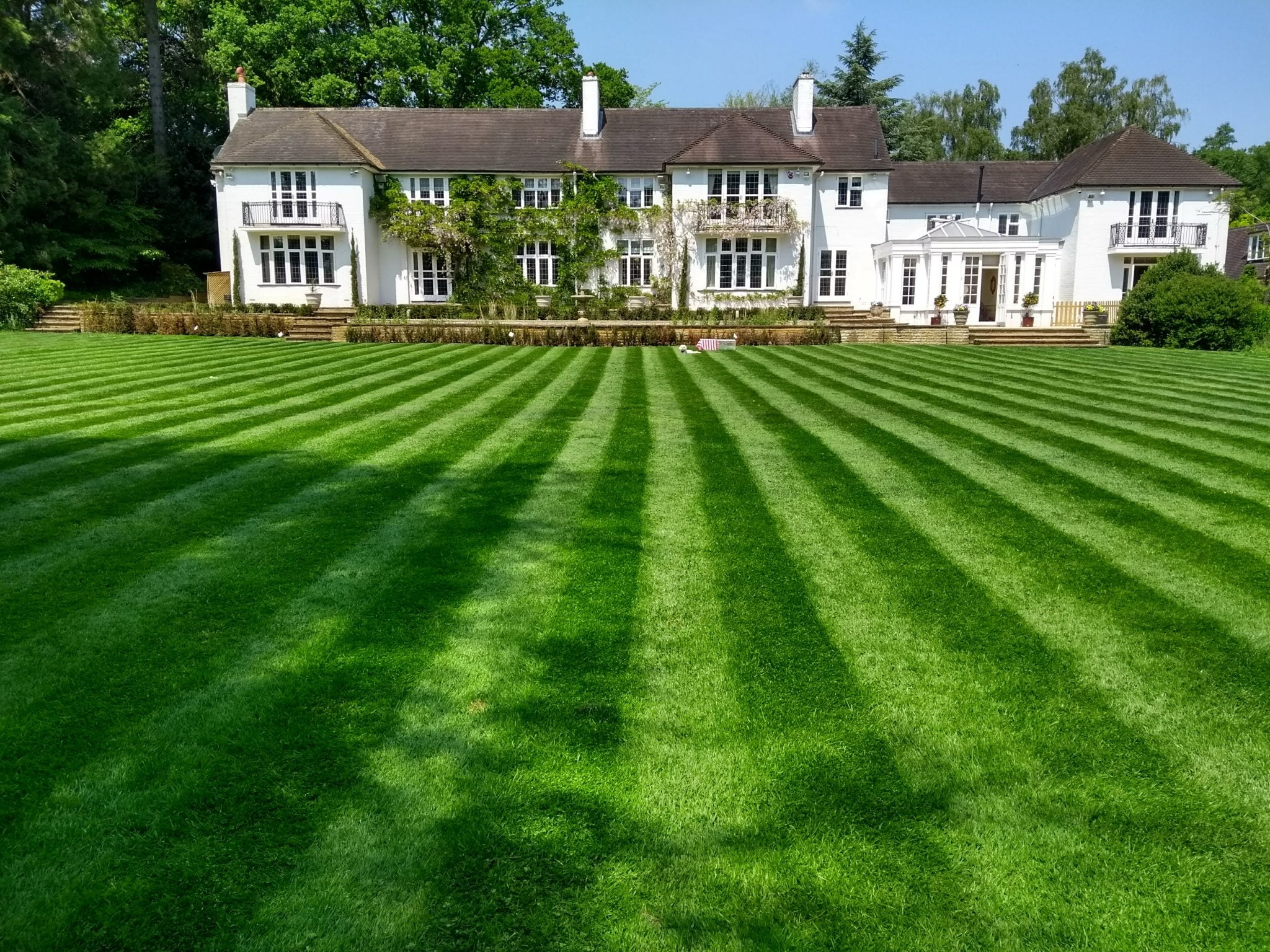 Lawn Improvement near Ascot