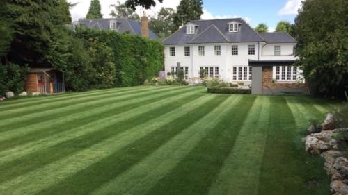 Burwood Park lawn