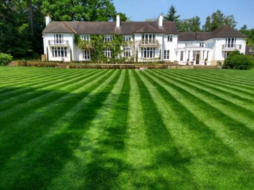 Ascot lawn