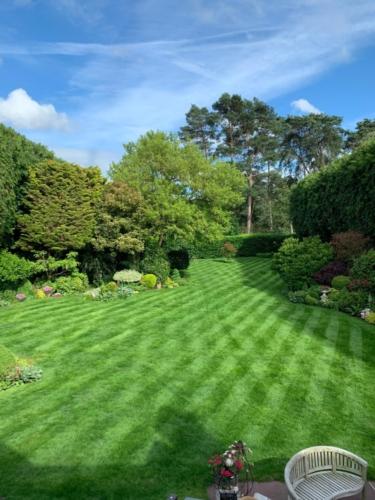 Weybridge lawn